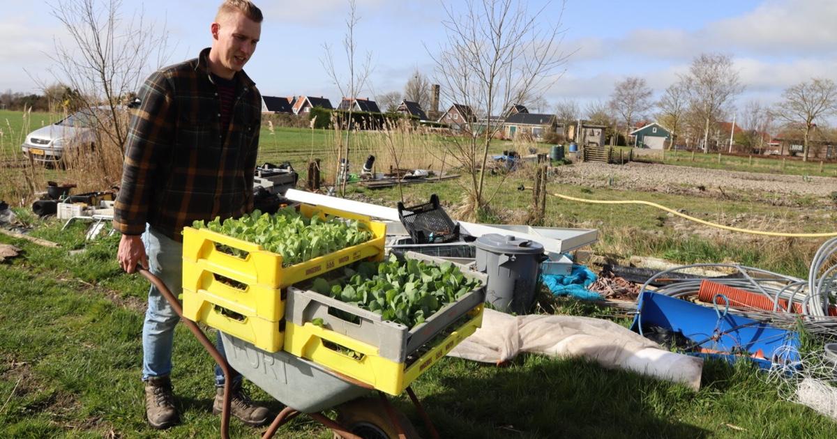 plantjesmarkt-yne-sinnefarm